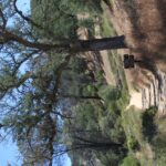 Pinnacles National Monument Balconies Caves Loop