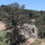 Pinnacles National Monument High Peaks Trail