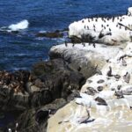 Seals and bird La jolla