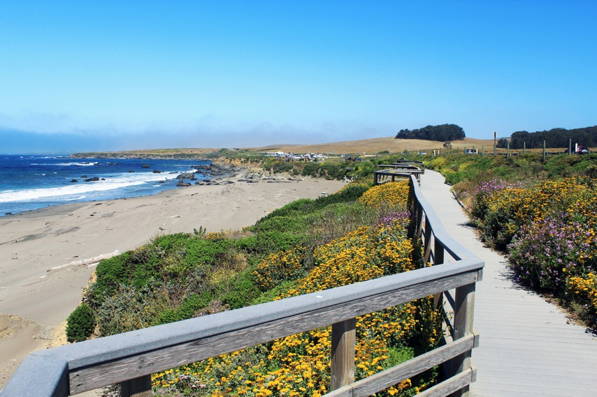 elephant-seal-viewing-area-in-san-simeon