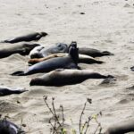 elephant-seals-fighting