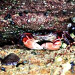 Crab in the tide pool