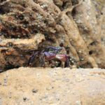 Crab standing on rock