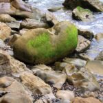 Green rock at beach