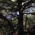 Harry potter tree seeley falls
