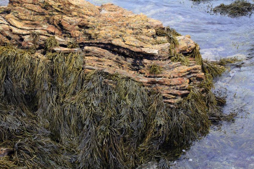 Tide Pools Of Little Corona Del Mar California Through