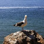 Seagull in Morro bay