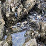 Tide pools in Corona del mar