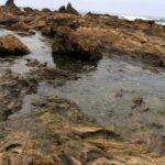 Tide pools up close