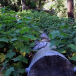 Tree stump in forrest