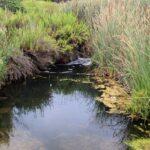 Water runoff corona del mar