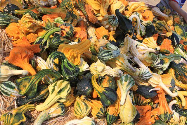 Live Oak Canyon Pumpkin Patch In Yucaipa