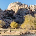 Joshua Tree National Park Guide: Hikes, Mines, Arches & Views