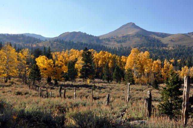 Fall in Lake Tahoe: Salmon Run & Hope Valley