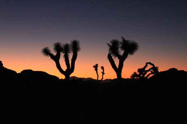 Barker Dam Trail: Joshua Tree National Park