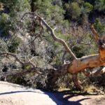 Fallen tree 150x150