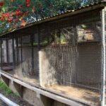 Old LA Zoo Cage