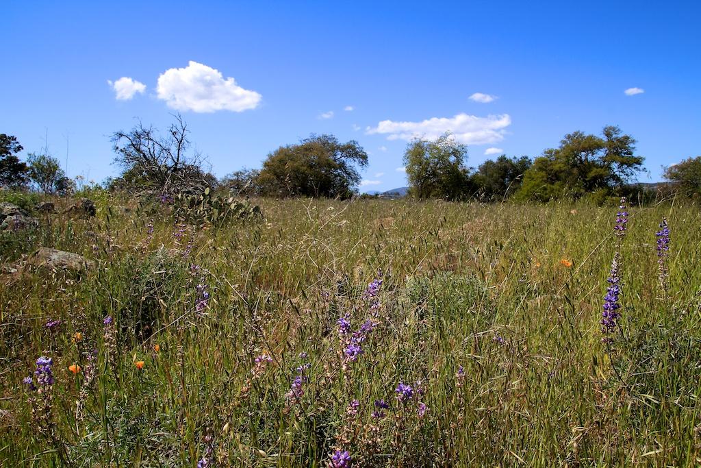 Santa Rosa Plateau: Vernal Pools, Wildflowers & Adobes