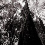 Ewoldsen Trail 11