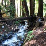 Ewoldsen Trail 12