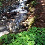 Ewoldsen Trail 2