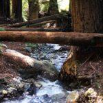 Ewoldsen Trail 3