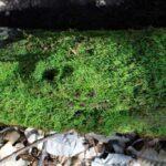 Ewoldsen Trail 6