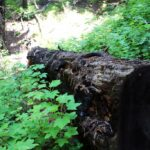 Ewoldsen Trail 8