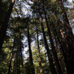Ewoldsen Trail 9