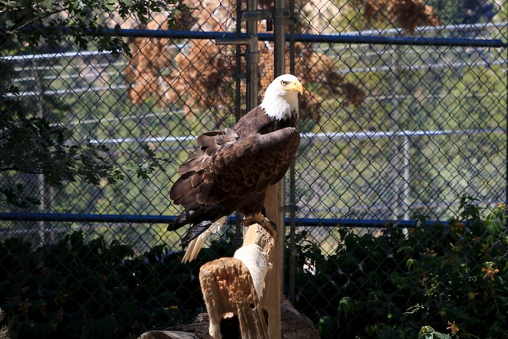 Wildhaven Ranch: Wildlife Sanctuary in Lake Arrowhead