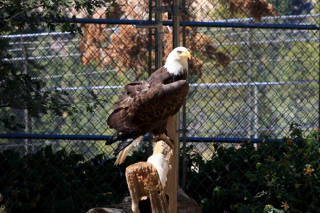 Wildhaven Ranch: Wildlife Sanctuary in Lake Arrowhead