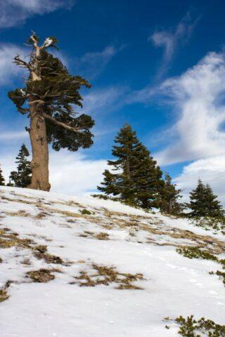 MT Baldy Winter 320x480