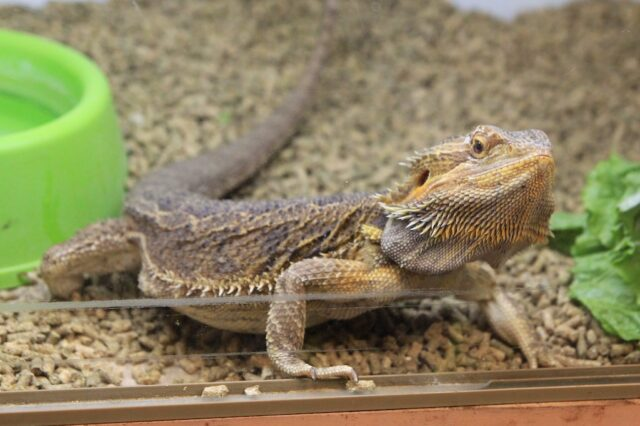 Prehistoric Pets: A Reptile Zoo and Store California Through My Lens