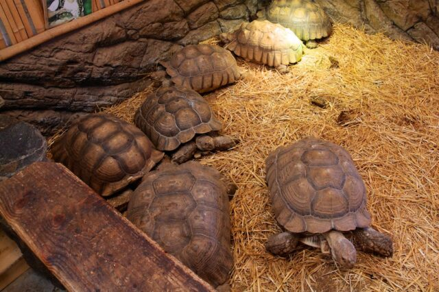 Tortise