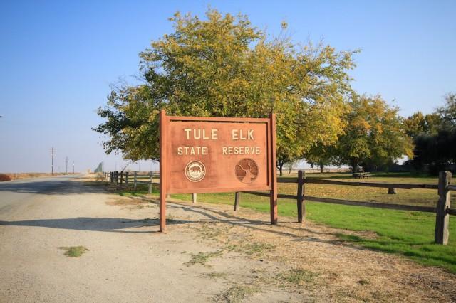 Tule Elk State Reserve 1