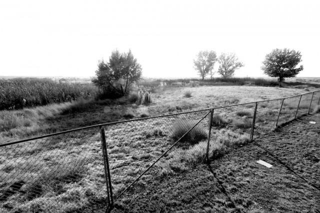 Tule Elk State Reserve 5