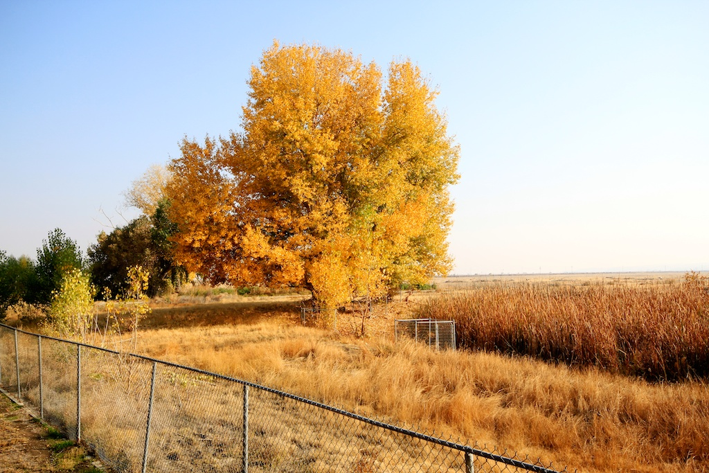 Tule Elk State Natural Reserve