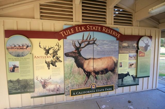 Tule Elk State Reserve 8