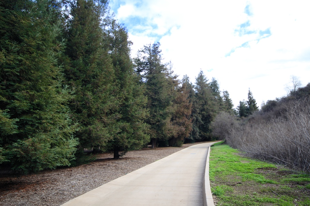 Carbon Canyon Park: Southern California's Coastal Redwoods