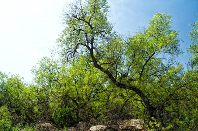 Harford Springs Reserve 4