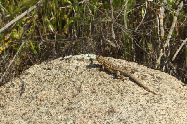 Harford Springs Reserve 7