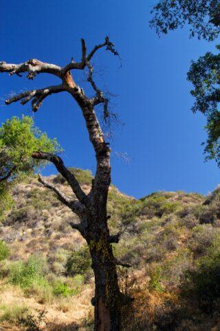 Eaton Canyon Falls 7