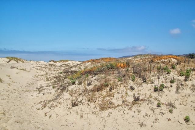 San Buenaventura Beach 16