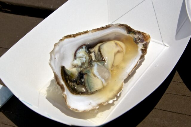 Jolly Oyster 6
