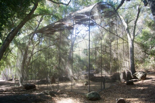 Peter Strauss Ranch 14