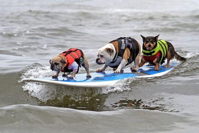 Dog Training Huntington Beach Ca