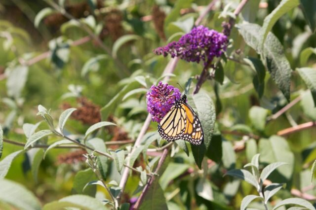 Bird and Butterfly Garden 10