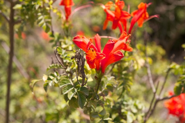 Bird and Butterfly Garden 14