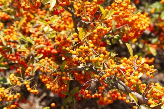Bird and Butterfly Garden 5