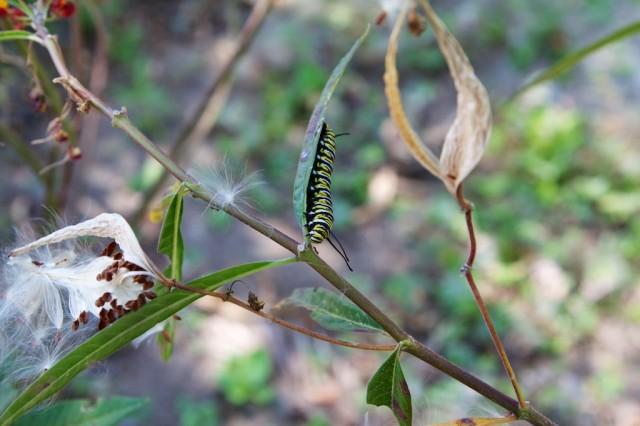 Bird and Butterfly Garden 6